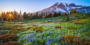 Фотографии США Парки Гора Пейзаж Дерева Mount Rainier National Park Природа