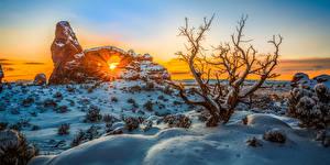 Фотографии США Парк Зимние Рассвет и закат Снеге Дерево Солнца Arches National Park Природа