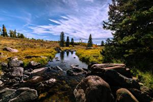Фотография Америка Камень Ручей Деревьев Mammoth Creek Природа