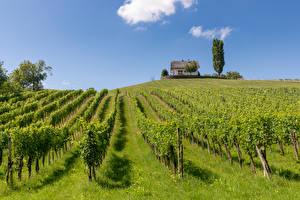 Фотография Австрия Дома Поля Виноградник Кусты Kloch Природа