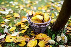 Картинки Осень Траве Листва Корзина