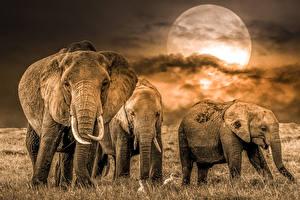 Картинки Слон Луна животное