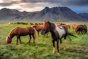 Картинки Исландия Гора Лошадь Snæfellsnes Природа