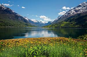 Фотографии Норвегия Гора Лето Одуванчики Фьорд Nordfjord Природа