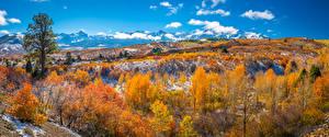 Фотография Штаты Осень Гора Панорамная Пейзаж Деревья Dallas Divide Природа