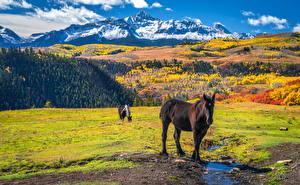 Фотографии Штаты Горы Осенние Лошади Wilson Peak, Colorado Природа