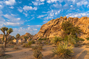 Фотографии Штаты Парки Калифорния Песок Joshua Tree National Park