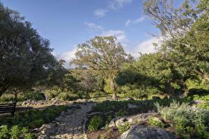 Обои США Парки Деревья Тропа Prehistoric Garden Oregon Природа картинки